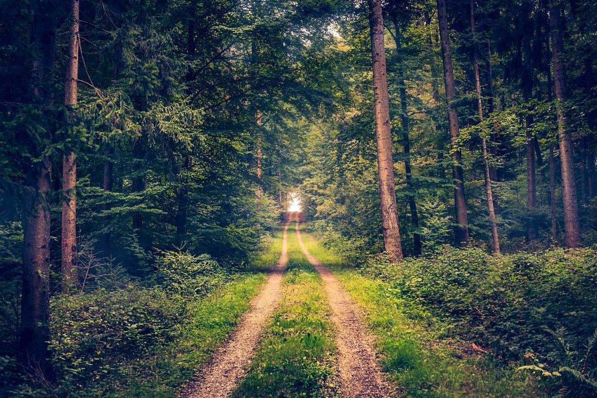 Urlaub Bayrischer Wald